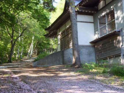 本堂前の桜道