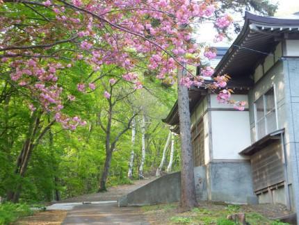 春の参道と桜1