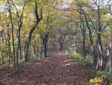 秋の参道3
