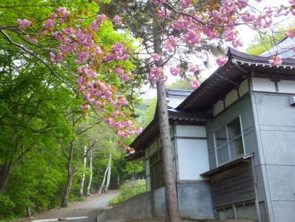 春の参道と桜3