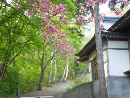 春の参道と桜2